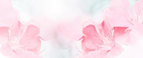 Pink red beautiful spring flower bloom branch background with free copy space for greeting card or environment cover page, template, web banner and header. photo