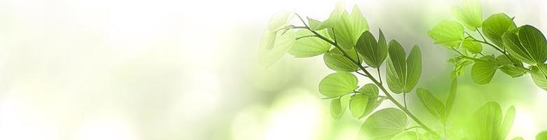Nature green tree fresh leaf on beautiful blurred soft bokeh sunlight background with free copy space, spring summer or environment cover page, template, web banner and header. photo
