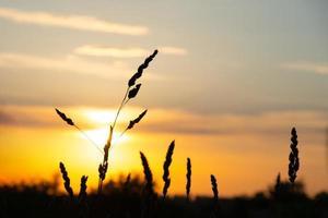 beautiful summer sunrise sun, warm summer mood photo