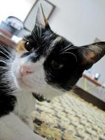 A kitten with a pink muzzle and long ears is wary of the camera, Portugal photo