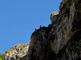 Eagles in the Canon Del Rio Lobos, province of Soria, Castilla y Leon, Spain photo