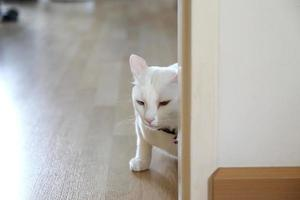 Cat in The House photo