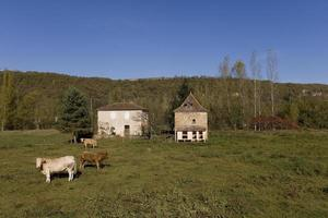 Cattle farm in the Lot, France photo