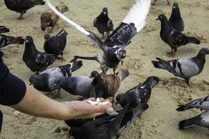 Feeding the pigeons photo