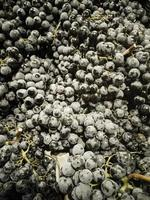Grapes in market photo