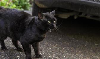Black cat on street photo