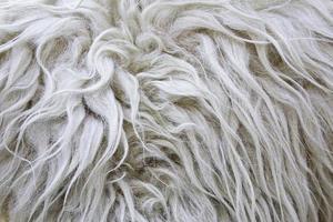 Wool Skin texture photo