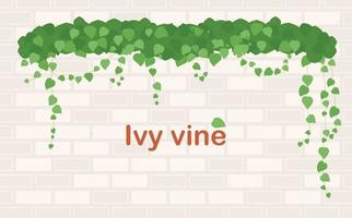Ivy on the wall. vector