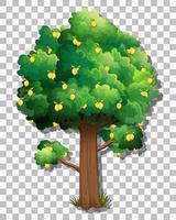 Lemon tree isolated vector