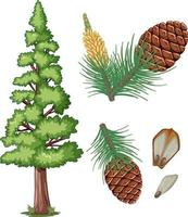 Set of pinecone and pine needles isolated vector