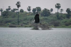pájaro volando en el río foto