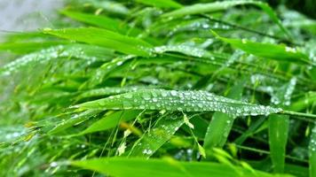 enfoque selectivo. imagen. Close-up de follaje verde fresco con gotas de agua después de la lluvia - imagen foto