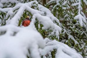 Red Christmas Ball on the snow covered Fir Branch photo