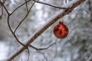Red Christmas ball on a snow covered wood branch. photo