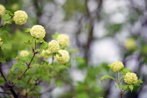 Decorative shrubs with flowers photo