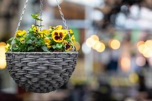 Pot with colorful pansy flowers photo