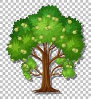 Guava tree isolated vector