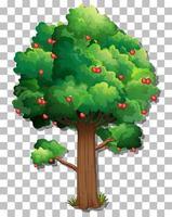 Apple tree isolated vector