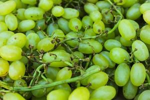 green grapes on twig photo