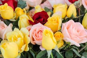 red and yellow roses photo