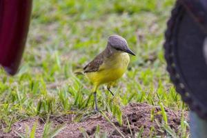 I saw you very popular brazilian bird photo