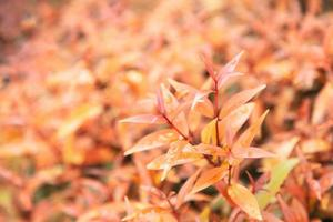 Yellow leaves texture background with rain water drops Autumn leaves photo