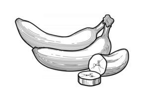 Banana illustration on white background vector