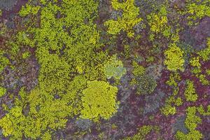 Textura de roca de piedra con musgo rosa verde y liquen de Noruega. foto