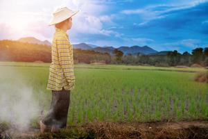 mujer agricultora mirando plántulas de arroz verde foto
