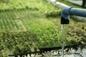 sistema hidropónico de flujo de agua y automatización de fertilizantes para huerta de roble verde foto