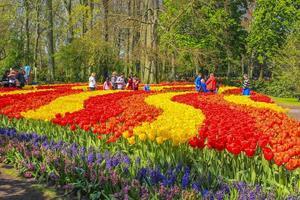 Many colorful tulips daffodils in Keukenhof park Lisse Holland Netherlands. photo