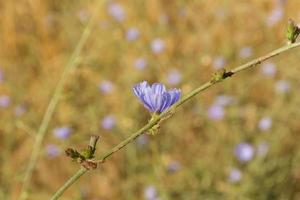 foto de primavera de flores silvestres violetas