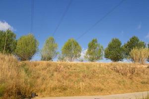 grupo de árboles sobre un fondo de cielo azul foto