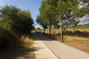 The pedestrian footpaths intersect in the park in summer in sunny weather photo
