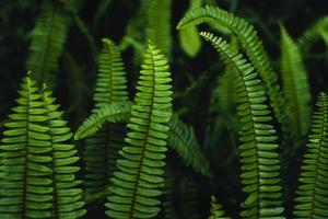 Fern leaves background in nature photo