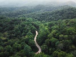 bosque verde en los trópicos desde arriba foto