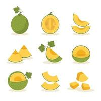 Set of Melon Fruit Icons vector