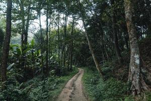 El camino hacia una aldea rural en un bosque tropical. foto