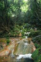 Waterfall and moss in tropical nature photo