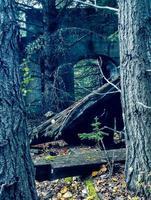 Lower Bank Head Ghost town Banff National Park Alberta Canada photo