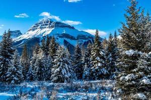 Hillsdale Meadows bajo un manto de nieve, el Parque Nacional Banff, Alberta, Canadá foto