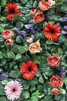Background of spring artificial red and pink chrysanthemums and peony roses in the garden. Spring. Blooming wall. photo