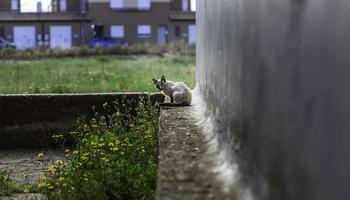 White cat resting street photo