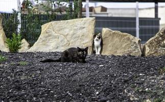 Street homeless cats photo