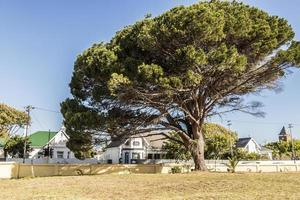 Gran árbol africano en Ciudad del Cabo, Sudáfrica. foto