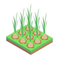 Onion Crops and Agriculture vector