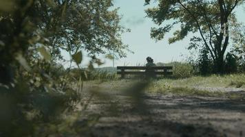 Woman sitting on wooden bench in the country reading a book and dog passes by video