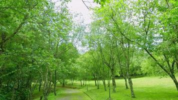 camino cubierto de musgo en la carretera en el parque nacional entre árboles verdes y césped de hierba verde bajo un cielo nublado. video