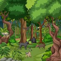 Tropical rainforest scene with various wild animals vector