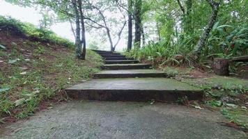 escalier recouvert de mousse dans le parc national parmi les arbres de verdure et la pelouse d'herbe verte sous un ciel nuageux. video